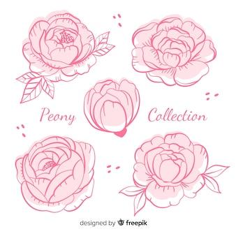 Colección de flores peonía en estilo dibujo a mano