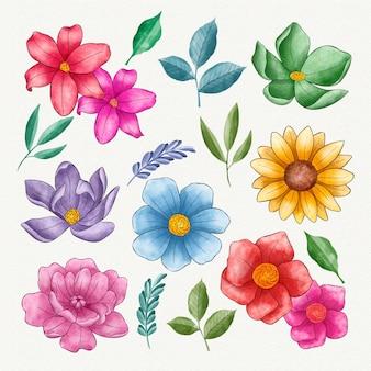 Colección de flores pintadas a mano
