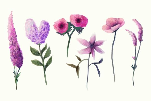 Colección de flores de primavera en acuarela