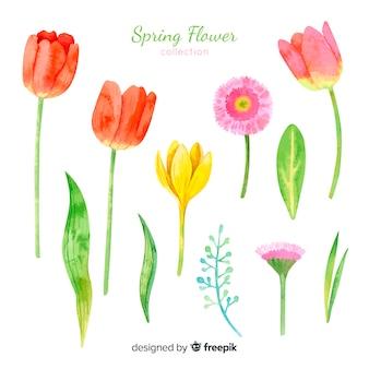 Colección de flores de primavera de acuarela