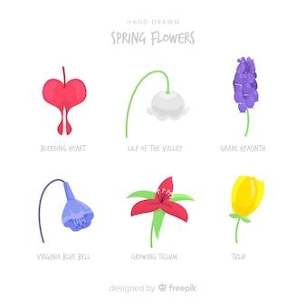Colección de flores de primavera dibujado a mano