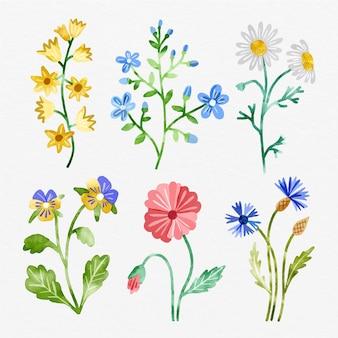 Colección de flores de primavera pintadas a mano.