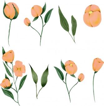 Colección de flores silvestres pintadas a mano.