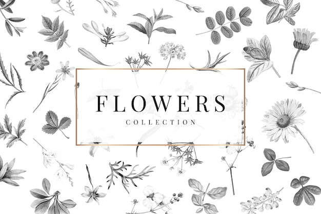Colección de flores sobre un fondo blanco.