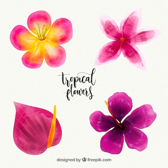 Colección de flores tropicales en estilo acuarela