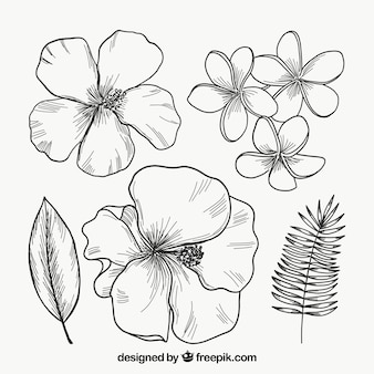 Colección de flores tropicales en monolíneas