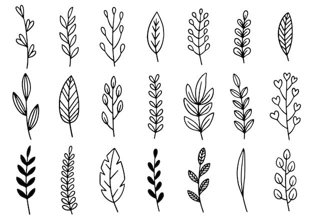 Colección de follaje de arte de eucalipto helecho forestal natural deja hierbas en estilo de línea. belleza decorativa elegante ilustración para diseño flor dibujada a mano