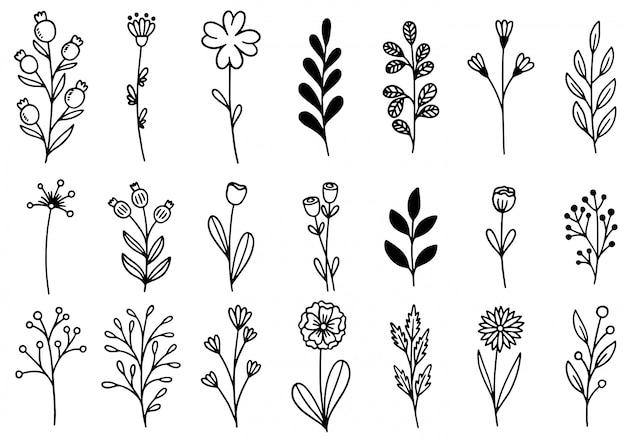 Colección de follaje de arte de eucalipto helecho forestal natural deja hierbas en estilo de línea. flor dibujada a mano