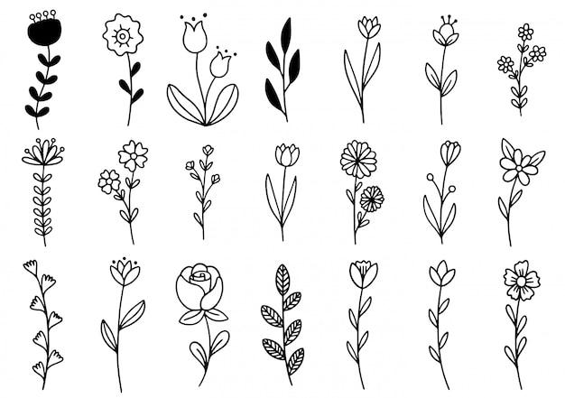 Colección de follaje de arte de eucalipto helecho forestal natural deja hierbas en estilo de línea.