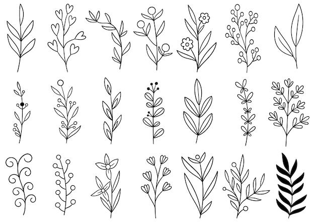 Colección de follaje de arte de eucalipto helecho forestal