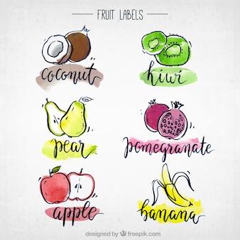 Colección de frutas en acuarela