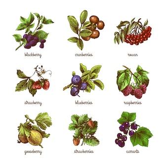 Colección de frutas del bosque dibujadas a mano