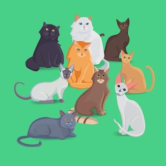 Colección de gatos de diferentes razas. establecer gatos. conjunto de ilustración.