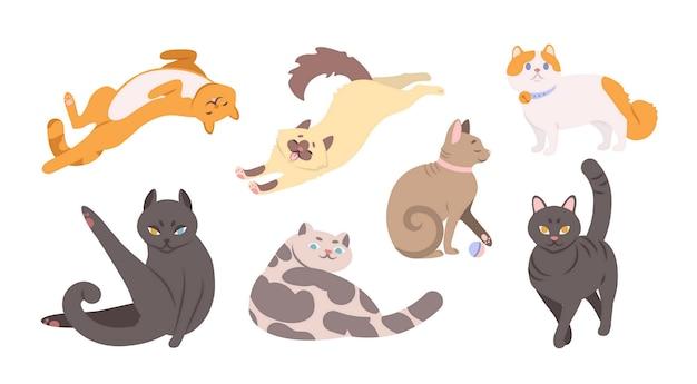 Colección de gatos graciosos de varias razas.