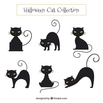 Colección de gatos negros