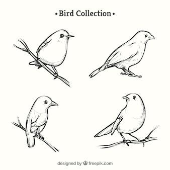 Colección hecha a mano de pájaros