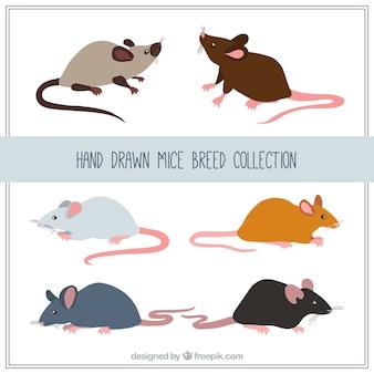 Colección hecha a mano de raza de ratones