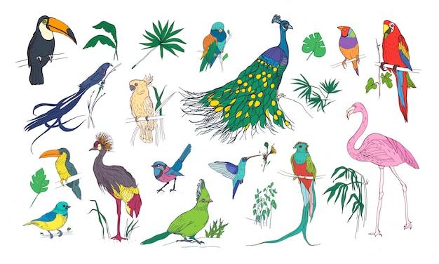 Colección de hermosas aves exóticas tropicales con plumaje de colores brillantes y hojas de plantas de la selva.