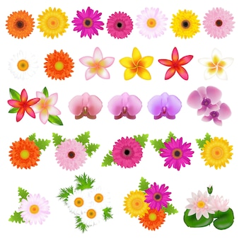 Colección hermosas flores, sobre fondo blanco, ilustración