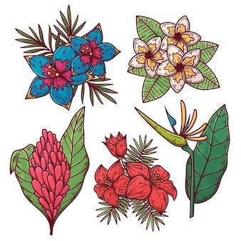 Colección de hermosas flores
