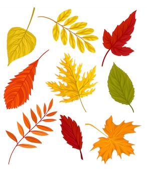 Colección de hermosas hojas de otoño coloridas ilustración sobre un fondo blanco