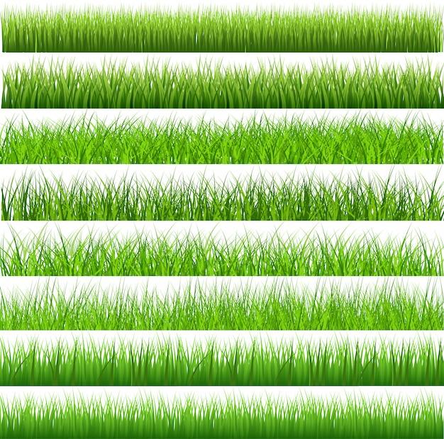 Colección de hierba verde sobre fondo blanco
