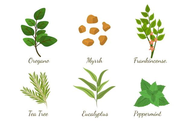 Colección de hierbas de aceite esencial