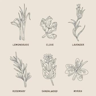 Colección de hierbas de aceites esenciales dibujados a mano realista