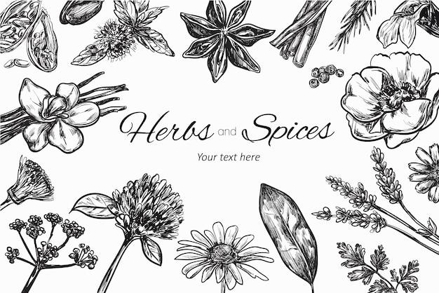 Colección de hierbas y especias