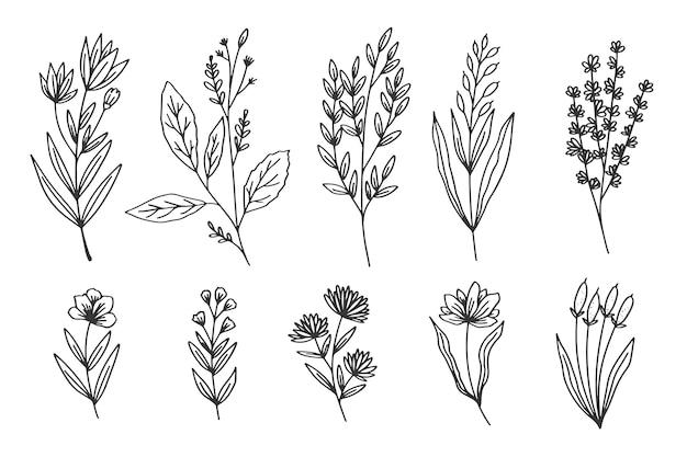 Colección de hierbas y flores silvestres
