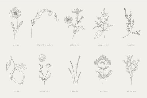 Colección de hierbas y plantas curativas.