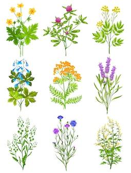Colección de hierbas silvestres