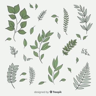 Colección de hojas botánicas vintage