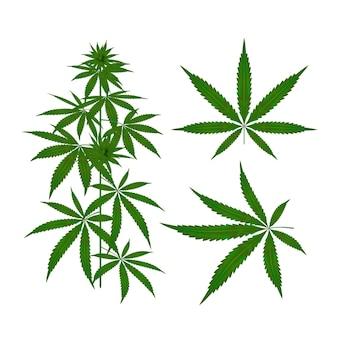 Colección de hojas de cannabis botánico