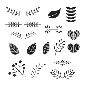 Colección de hojas decorativas