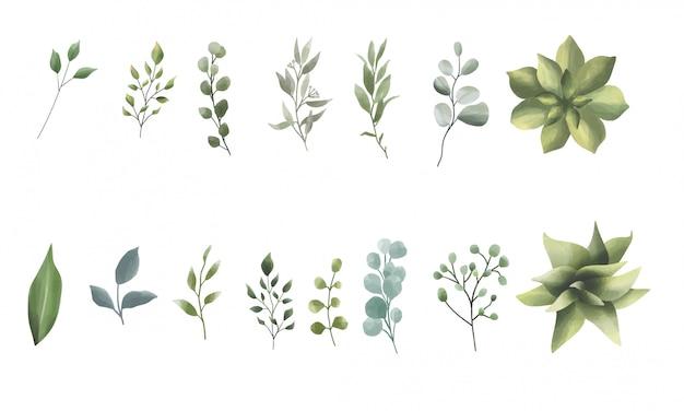 Colección de hojas y estilo acuarela