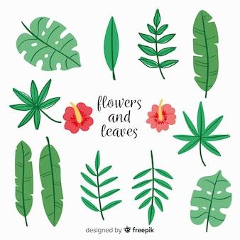 Colección de hojas y flores dibujadas a mano