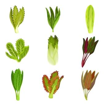 Colección de hojas frescas de ensalada, radicchio, lechuga, romana, col rizada, col, alazán, espinaca, mizuna, comida vegetariana orgánica saludable