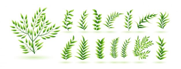 Colección de hojas de hierba verde natural
