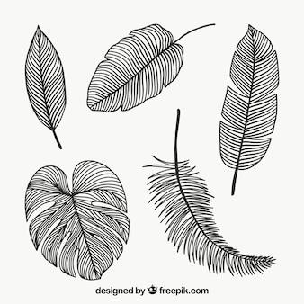 Colección de hojas en monolíneas