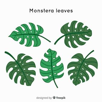 Colección hojas de monstera dibujadas a mano
