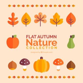 Colección de hojas otoñales y frutas