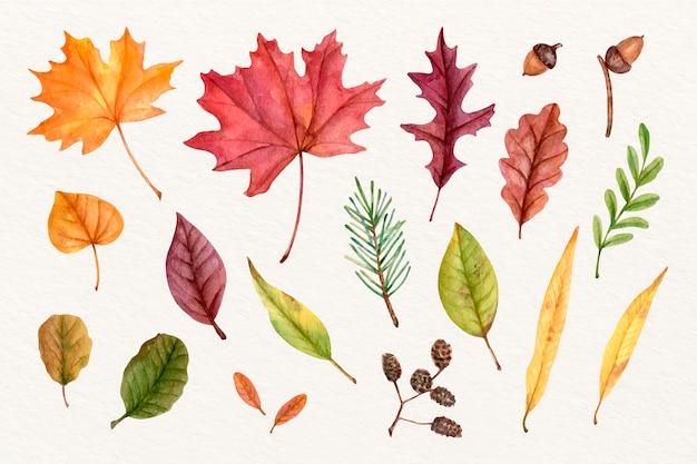 Colección de hojas de otoño en acuarela