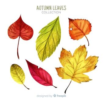 Colección de hojas de otoño acuarelas
