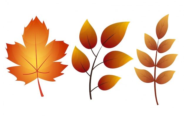 Colección de hojas de otoño. conjunto de hojas de otoño, aislado sobre fondo blanco.