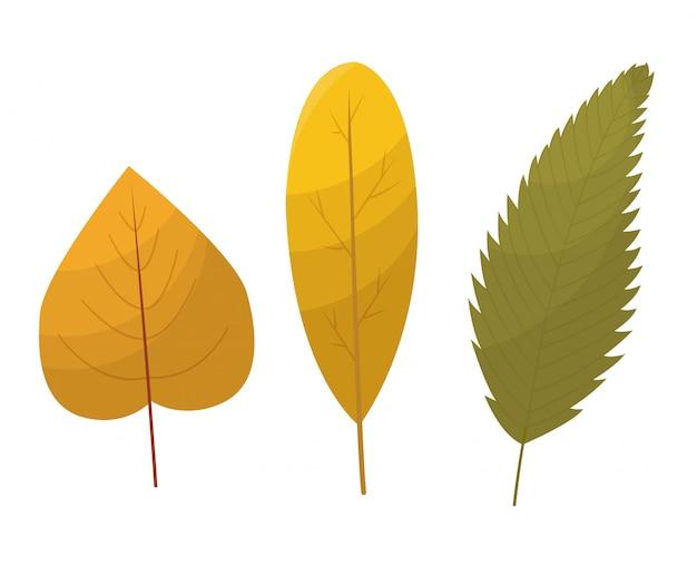 Colección de hojas de otoño. conjunto de hojas de otoño