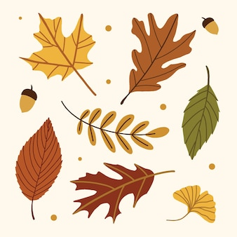 Colección de hojas de otoño, hojas de otoño amarillas y rojas, conjunto de vectores aislados
