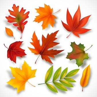 Colección de hojas de otoño