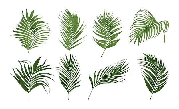 Colección de hojas de palmera
