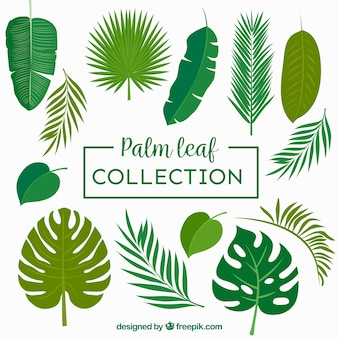 Colección de hojas de palmeras